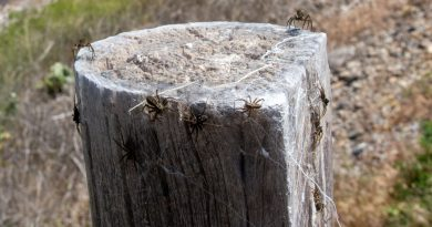 Spider Orgy