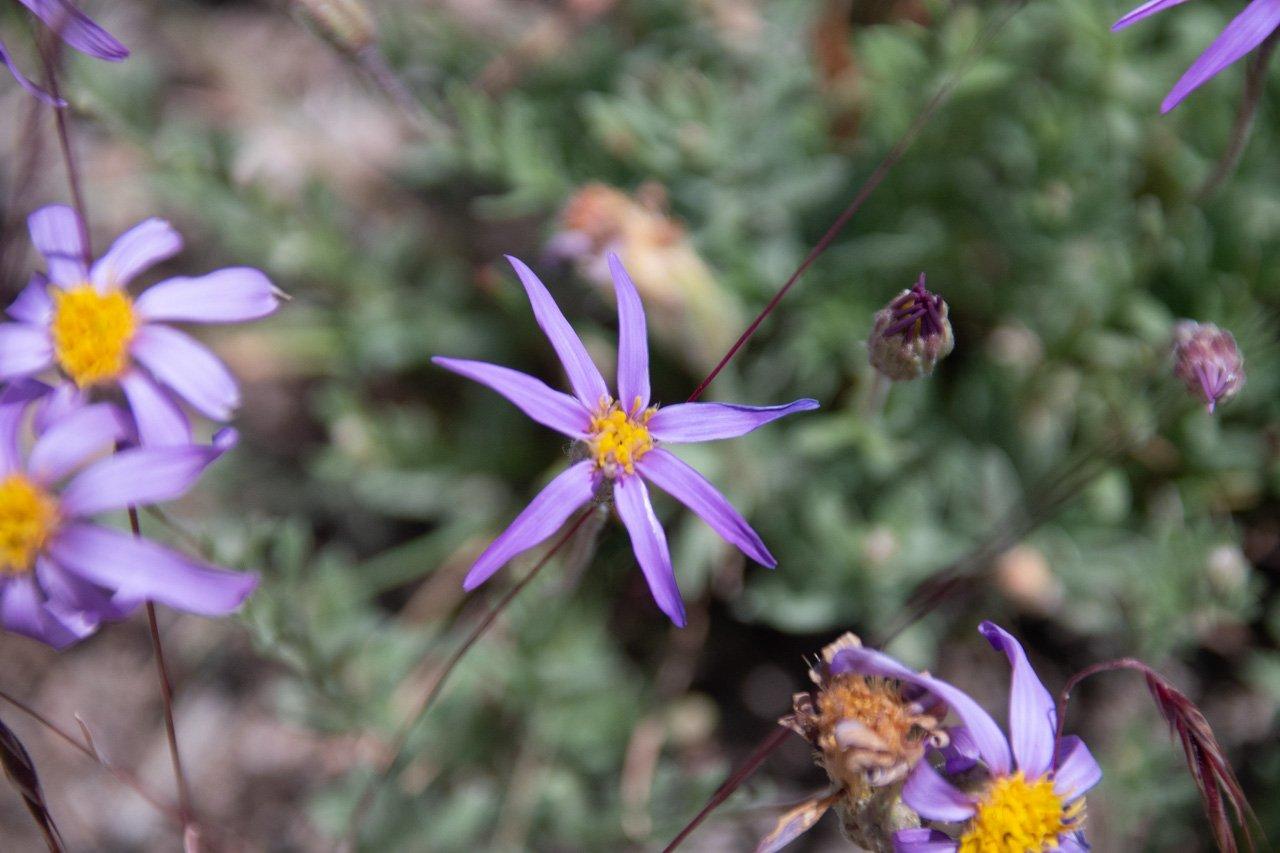 "114° 4'25.92""W, 43°20'51.55""N, Blaine County Idaho, Flower, Flowers, Macro"
